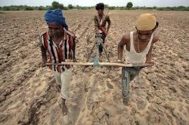 farmers (5)