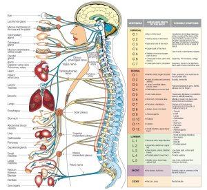 Human Body Parts 3d Images-OmTq