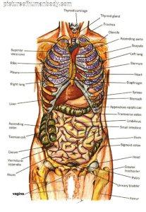 organs (5)