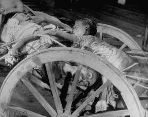 Corpses lying in a cart on their way to be cremated after bloody rioting between Hindus and Muslims.